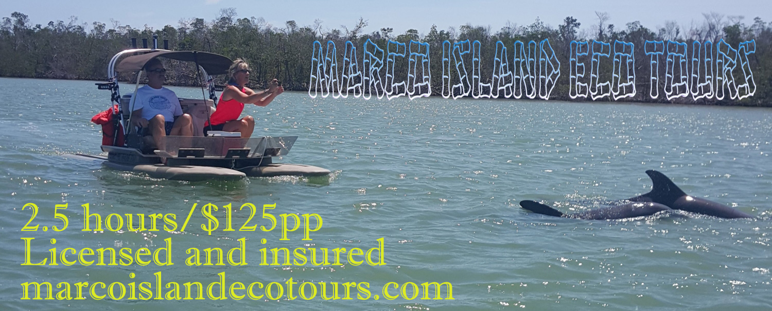 Watch Dolphins play and Osprey hunt!
